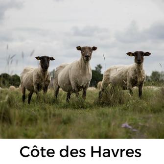 Urlaub mit Hund in der Normandie - Tour entlang der Côte des Havres