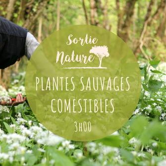 ENS La Pomardière ; Chinon ; sortie 37 ; Touraine ; Nature ; Saint-Benoît-la-Forêt ; Plantes sauvages comestibles