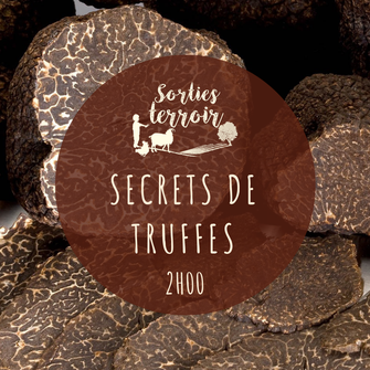truffe et trufficulture en Touraine - sortie terroir