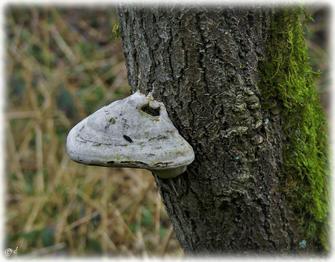 Der Pilz & die kleine Schnecke