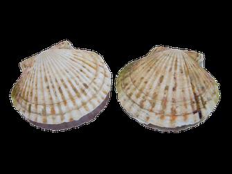 ほたて貝,素材と味へのこだわりが築いた100年の歴史,ストー缶詰株式会社
