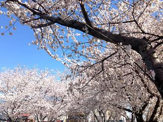 JPさん:埼玉県新座市(3/31)