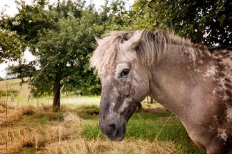 pferd-auf-der-weide-portrait