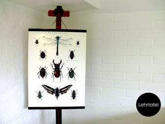 Lehrtafel Zeichnung Käferplakat