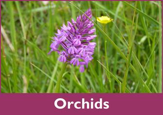 orchids vic-bilh madiran