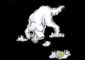Schnüffelspiele - Kiwi-die-Hundeschule