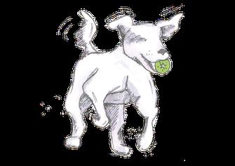 Rückruf Kurs - Kiwi-die-Hundeschule