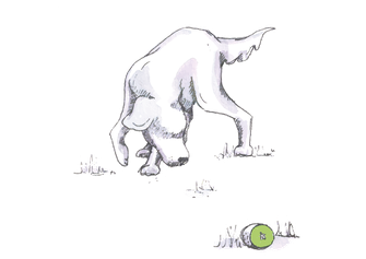 Anti-Giftköder Training - Kiwi-die-Hundeschule