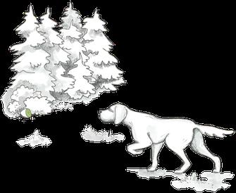 Jagdkontrolltraining - Kiwi-die-Hundeschule