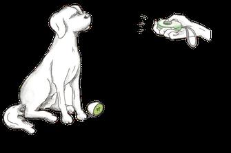 Clickertraining - Kiwi-die-Hundeschule