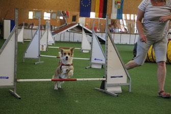 Die Agility-Parcours sind an die Leistungsfähigkeit und den Ausbildungsstand der Hunde angepasst