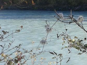 Fluss und Pflanzen