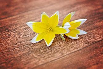 gelbe Blume auf Holzplatte