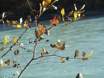 Zweige Fluss