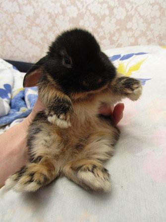Элитные кролики купить