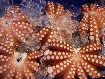 Fischmarkt Oktopus Italien