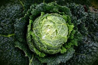 Wirsing Gemüse Typische Zutat Ribollita