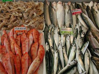 Fischmarkt Fische Toskana