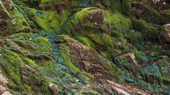 Der versumpfte Wald des Skuleskogen hat ein hohes Grundwasserniveau, insbesondere seitdem keine künstliche Entwässerung mehr stattfindet. Beste Bedingungen für Moose und Flechten, Frösche und Käfer. Mit etwas Glück entdeckt man auch den Dreizehenspecht.