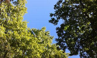Blauer Himmel ist durch zwei Bäume hindurch zu sehen, eine Buche und ein Baum mit rötlichem Blattwerk