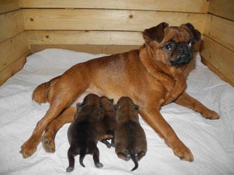 Мать со щенками