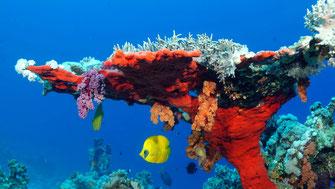 Wasini Kenya, l'isola di corallo