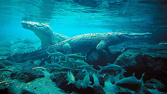 Mzima Springs-Una coppia inquietante di coccodrilli del Nilo, ciascuno di circa 3 metri di lunghezza