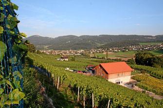 Weinwanderweg im Klustal