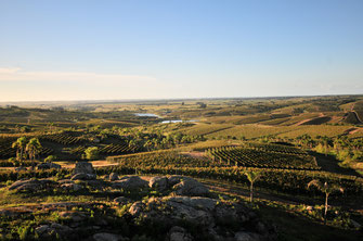 Weinberge des Weingutes Pueblo del Sol in Uruguay