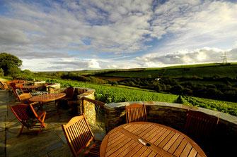 Blick vom Weingut Camel Valley in Großbritannien