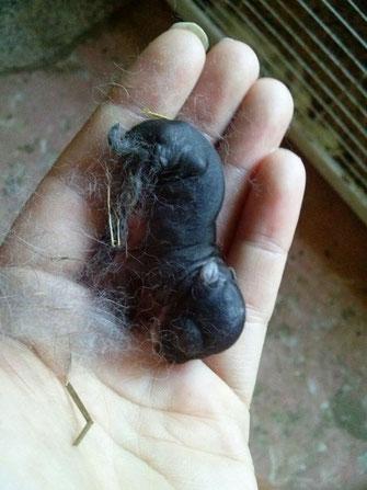Camada con peanut