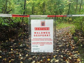 Forstamt sperrt Waldwege und sorgt durch Fällarbeiten bis Dezember für Sicherheit auf den Weidelsbergwegen zur Burg.