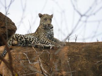 Safaris in Kenia erleben auf individuellen Privat Safaris