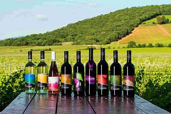 Terradonnà cantina vinicola Suvereto