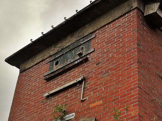 Junge Turmfalken im Einflugloch