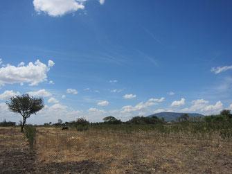 遠くに見えるのはキリマ・ンボゴです