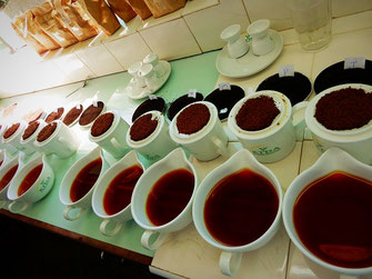 品質管理室にて、紅茶のテイスティングです