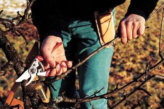 Scherenetui für Felco-Gartenscheren
