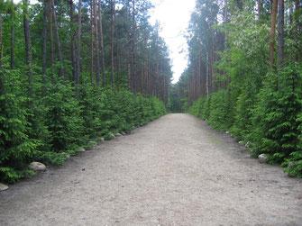 Gedenkallee in Sobibor