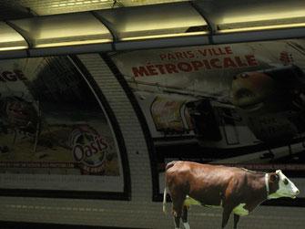 旅する牛:metroホームと牛の合成写真