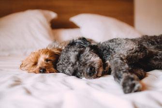 2 Hunde schlafen