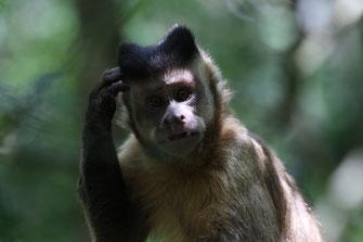 Affe denkt nach