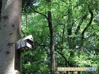 Vogelhäuschen im Wald