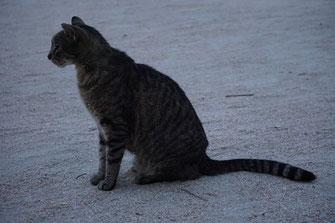 In der Dämmerung aktiv: die Straßenkatzen von Miami Beach