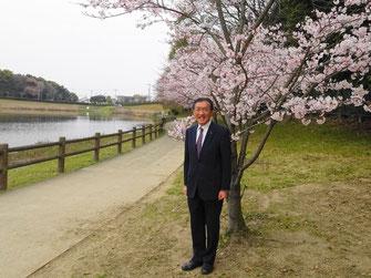 2001年に植樹した桜が満開