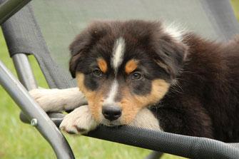 Frodo mit knapp 10 Wochen