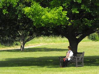 グラストンベリー修道院には姫リンゴの木がたくさん・・・