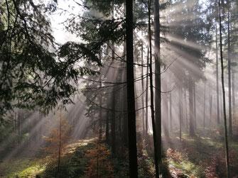 Wie die Sonne hier durch den Nebel strahlt, so will Gott unser Leben hell machen und erleuchten.