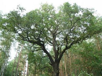 """Eine Baum hat viele Äste mit und von denen er lebt, so wie wir Menschen viele """"innere Orte"""" haben, auf die wir zurückgreifen können."""