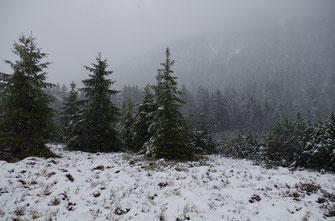 Niemand kann durch den Nebel oder unter den Schnee sehen! Selig ist, wer vertrauen kann, auch wenn er nicht alles sieht!